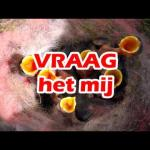 Embedded thumbnail for WIM - 'Ventileren'